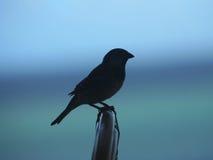 σκιαγραφία πουλιών στοκ φωτογραφία με δικαίωμα ελεύθερης χρήσης