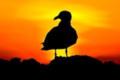 σκιαγραφία πουλιών Στοκ Φωτογραφία