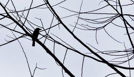 Σκιαγραφία πουλιών ενάντια στον γκρίζο ουρανό Στοκ φωτογραφία με δικαίωμα ελεύθερης χρήσης
