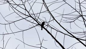 Σκιαγραφία πουλιών ενάντια στον γκρίζο ουρανό Στοκ εικόνα με δικαίωμα ελεύθερης χρήσης