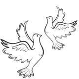Σκιαγραφία πουλιών περιστεριών απομονωμένος Στοκ Φωτογραφία