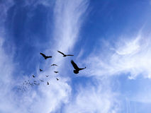 Σκιαγραφία πουλιών στο χρωματισμένο μπλε ουρανό βουνών Στοκ Εικόνες