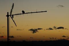 Σκιαγραφία πουλιών Στοκ Εικόνα