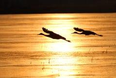 σκιαγραφία πτήσης Στοκ φωτογραφία με δικαίωμα ελεύθερης χρήσης
