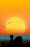 Σκιαγραφία σαλιγκαριών Στοκ Εικόνες