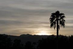 Σκιαγραφία-σούρουπο φοινίκων στο Παλμ Σπρινγκς Καλιφόρνια Στοκ Εικόνα