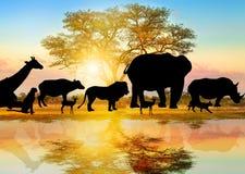 Σκιαγραφία της αφρικανικής άγριας φύσης ελεύθερη απεικόνιση δικαιώματος