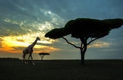 Σκιαγραφία της αφρικανικής σκηνής σαφάρι Στοκ Εικόνα