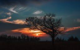 Σκιαγραφία της βαλανιδιάς στο ηλιοβασίλεμα Στοκ εικόνες με δικαίωμα ελεύθερης χρήσης