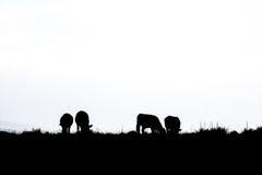 Σκιαγραφία της βοσκής βοοειδών Στοκ εικόνες με δικαίωμα ελεύθερης χρήσης