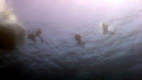 Σκιαγραφία της κολύμβησης δυτών σκαφάνδρων βαθιά υποβρύχιας στη Ερυθρά Θάλασσα απόθεμα βίντεο