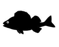 Σκιαγραφία της πέρκας ψαριών διανυσματική απεικόνιση