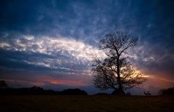 Σκιαγραφία του δέντρου και των αρσενικών ελαφιών στο ηλιοβασίλεμα Στοκ Εικόνες