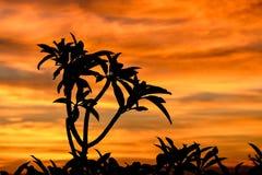 Σκιαγραφία του δέντρου στην Αφρική στην ανατολή ή το ηλιοβασίλεμα Στοκ Εικόνα