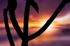 Σκιαγραφία του δέντρου στην Αφρική στην ανατολή ή το ηλιοβασίλεμα Στοκ Εικόνες
