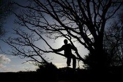 Σκιαγραφία του αγοριού στο δέντρο στοκ εικόνες