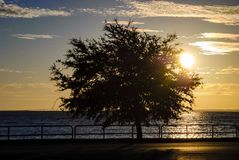 Σκιαγραφία του δέντρου από την ακτή στην ανατολή Στοκ εικόνα με δικαίωμα ελεύθερης χρήσης