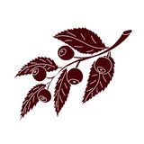 Σκιαγραφία του κλάδου βακκινίων με τα μούρα Στοκ φωτογραφία με δικαίωμα ελεύθερης χρήσης