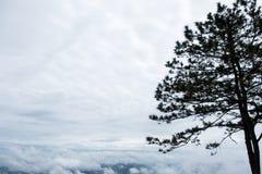Σκιαγραφία του πεύκου στην κορυφή του υψηλού βουνού στοκ φωτογραφίες με δικαίωμα ελεύθερης χρήσης