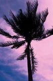 Σκιαγραφία του φοίνικα στον πολύχρωμο ουρανό Στοκ εικόνα με δικαίωμα ελεύθερης χρήσης