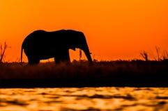 Σκιαγραφία του Bull ελεφάντων στο νησί Sidudu Στοκ Εικόνες