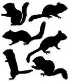 Σκιαγραφία του chipmunk Απεικόνιση αποθεμάτων