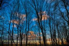 Σκιαγραφία των δέντρων ενάντια σε έναν μπλε ουρανό το βράδυ Στοκ Εικόνα