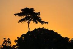 Σκιαγραφία των δέντρων ενάντια στον ουρανό ηλιοβασιλέματος Στοκ φωτογραφίες με δικαίωμα ελεύθερης χρήσης