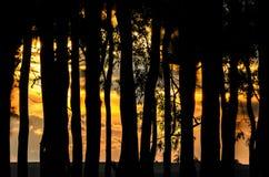 Σκιαγραφία των δέντρων σε ένα ηλιοβασίλεμα Στοκ Εικόνα
