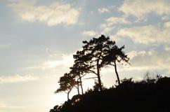 Σκιαγραφία των δέντρων Στοκ Φωτογραφίες