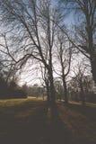 Σκιαγραφία των δέντρων Στοκ εικόνες με δικαίωμα ελεύθερης χρήσης