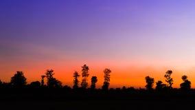 Σκιαγραφία των δέντρων στο μπλε ουρανό στην καθορισμένη σκηνή ήλιων Στοκ Φωτογραφία