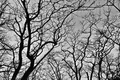 Σκιαγραφία των δέντρων στοκ φωτογραφία με δικαίωμα ελεύθερης χρήσης