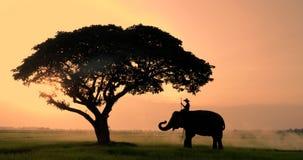Σκιαγραφία των ελεφάντων και mahouts το πρωί ένα φυσικό τοπίο μέσης φιλμ μικρού μήκους