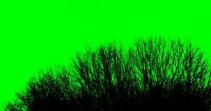 Σκιαγραφία των κλάδων δέντρων σε ένα πράσινο υπόβαθρο ελεύθερη απεικόνιση δικαιώματος