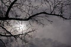 Σκιαγραφία των κλάδων με το νεφελώδη ουρανό Στοκ εικόνα με δικαίωμα ελεύθερης χρήσης