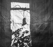 Σκιαγραφία των νεαρών βλαστών ντοματών σε μια πλαστική τσάντα με μια μεγάλη δομή τσαντών Στοκ Φωτογραφία