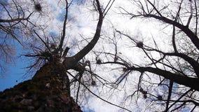 Σκιαγραφία των πετώντας κοράκων απόθεμα βίντεο