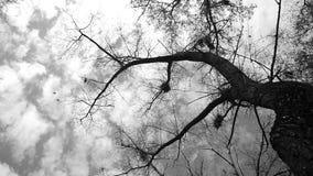 Σκιαγραφία των πετώντας κοράκων φιλμ μικρού μήκους