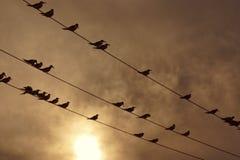 Σκιαγραφία των πουλιών στο ηλιοβασίλεμα, Laguna de Unare, Βενεζουέλα Στοκ Εικόνες