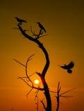 Σκιαγραφία των πουλιών Στοκ Εικόνες