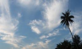 Σκιαγραφία των φοινίκων ενάντια στο μπλε ουρανό με τα σύννεφα Στοκ Εικόνες
