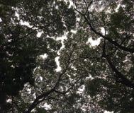 Σκιαγραφία των φύλλων δέντρων ενάντια στον ουρανό στοκ φωτογραφία