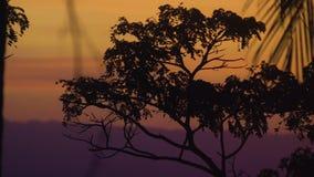 Σκιαγραφία των φύλλων δέντρων και φοινικών σε ένα όμορφο κόκκινο ηλιοβασίλεμα στο νησί απόθεμα βίντεο