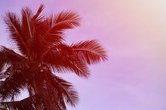 Σκιαγραφία των φύλλων των φοινικών καρύδων στην παραλία στοκ εικόνα με δικαίωμα ελεύθερης χρήσης