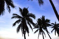 Σκιαγραφία των φύλλων των φοινικών καρύδων στην παραλία στοκ εικόνα