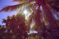 Σκιαγραφία των φύλλων των φοινικών καρύδων στην παραλία στοκ εικόνες με δικαίωμα ελεύθερης χρήσης