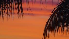 Σκιαγραφία των φύλλων φοινικών σε ένα όμορφο κόκκινο ηλιοβασίλεμα στο νησί απόθεμα βίντεο