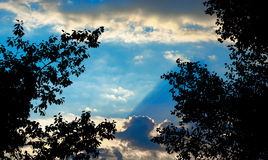 Σκιαγραφία των φύλλων δέντρων στο μπλε νεφελώδες ηλιοβασίλεμα Στοκ Εικόνες