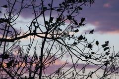 Σκιαγραφία των nude κλάδων δέντρων στο ζωηρόχρωμο ρόδινο ιώδη ουρανό ηλιοβασιλέματος Στοκ εικόνες με δικαίωμα ελεύθερης χρήσης
